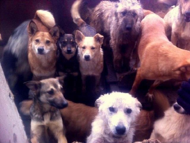 Тридцать собак погибли вовремя пожара вприюте вЧелябинской области