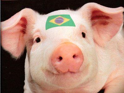 Свинина по-бразильски: Россия выбилась в лидеры по импорту латиноамериканского мяса