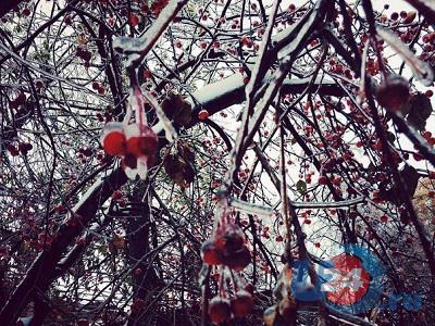 В понедельник южноуральцев снова ждут мокрый снег и порывистый ветер