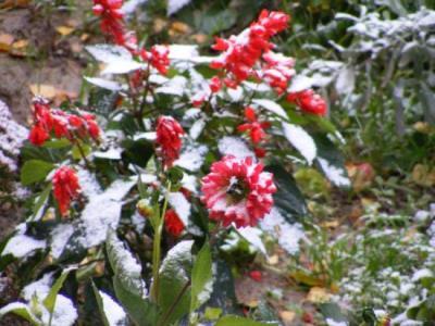 На Южный Урал зима пришла в октябре: снегопады продлятся еще три дня