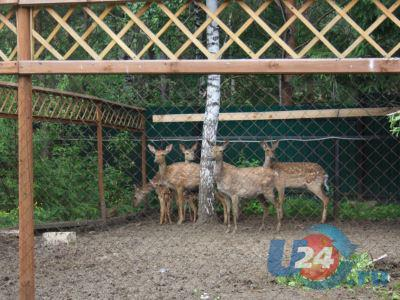 Олениху, которую напугали посетители «Таганая», нашли с поврежденной ногой