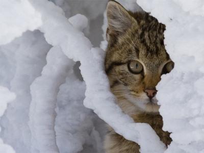 В понедельник одевайтесь теплее: на Южном Урале снова похолодает