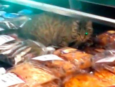 Кот-обжора из Владивостока принят в компартию и обзаводится аккаунтами в соцсетях