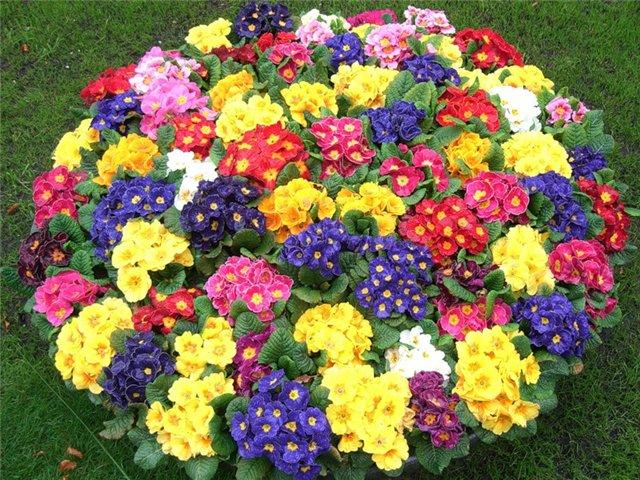 Красивая клумба из цветов