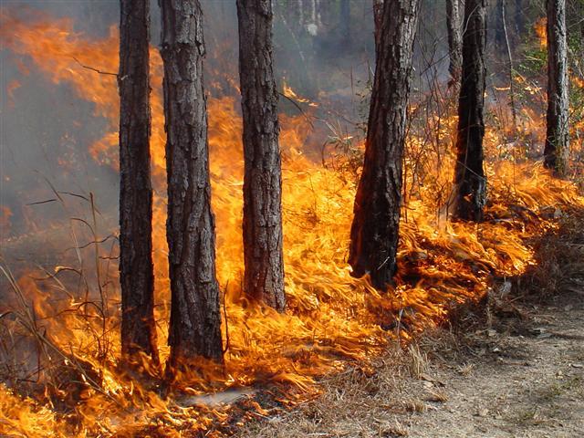 ВСвердловской области нет лесных пожаров