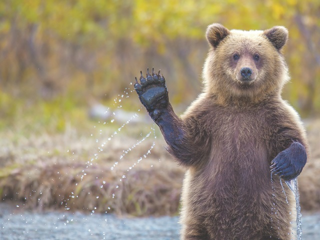 ВНП «Таганай» медведь напал нафотоловушку