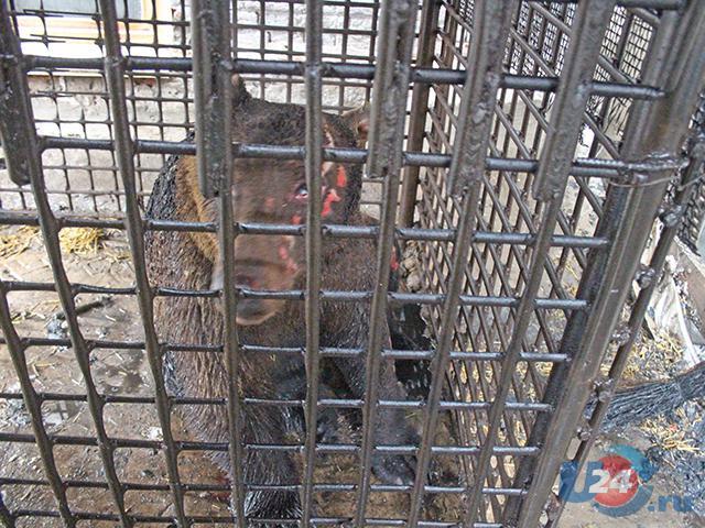 Медведь едва не умер впроцессе пожара вТроицке