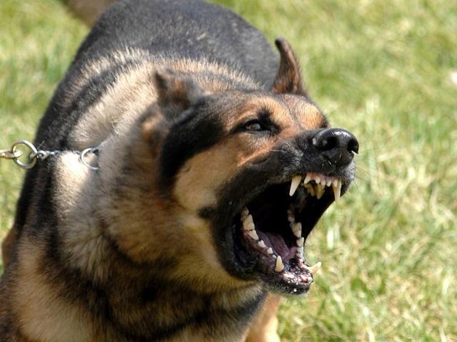Собачка покусала 3-летнего ребенка вКыштыме