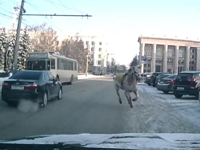Вцентре Челябинска ретивая лошадь чуть неустроила ДТП