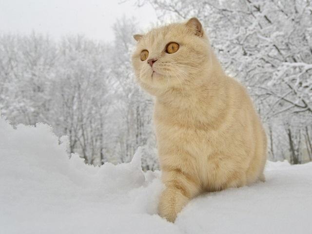 Ввыходные наСреднем Урале температура будет выше нуля