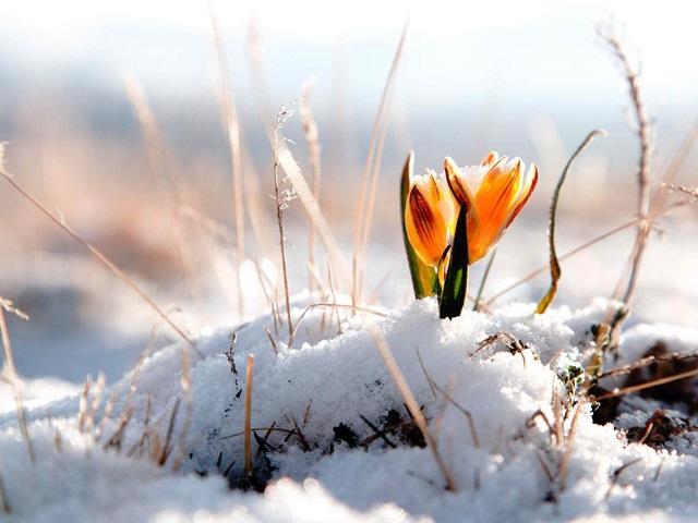 ВЧелябинской области вближайшие трое суток похолодает до20 градусов