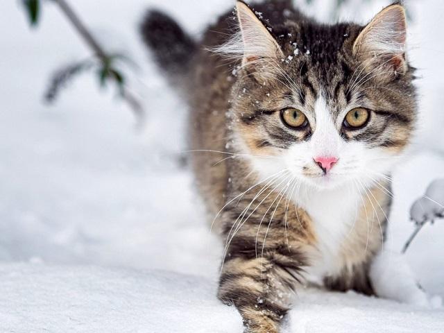 ВМЧС объявили экстренное предупреждение из-за снежного шторма