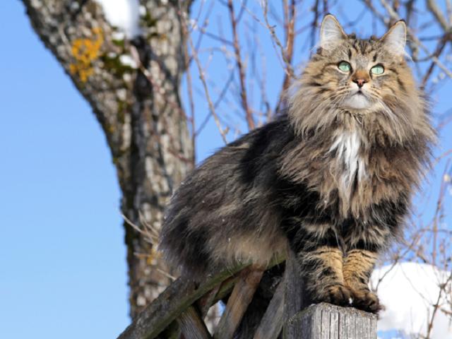 Челябинск ждет похолодание исильный ветер