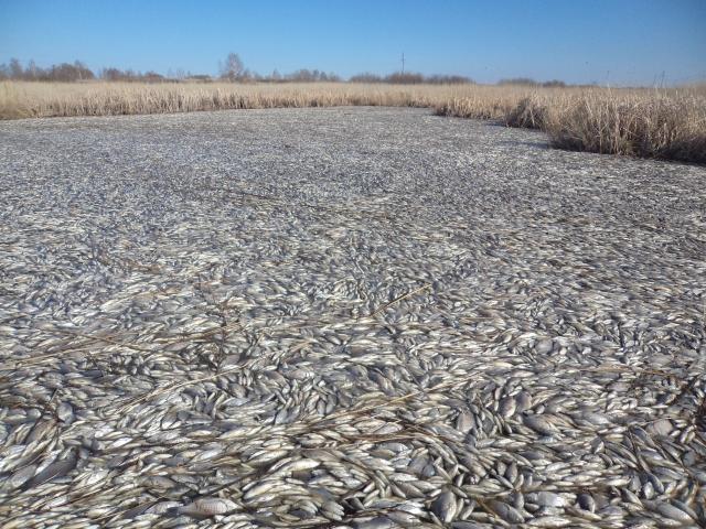 В одном из южноуральских озер погибла вся рыба. ВИДЕО