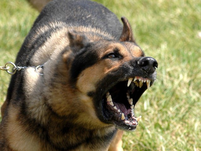 НаЮжном Урале владельца собак-убийц отправили под суд