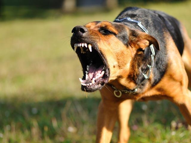 ВКопейске собачка напала наребенка. Требуется операция