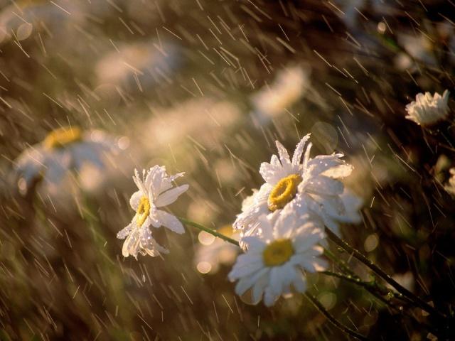 Воскресенье наЮжном Урале будет ветреным идождливым