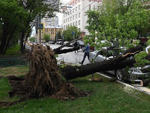 Сильный ветер в столице России повалил неменее 150 деревьев