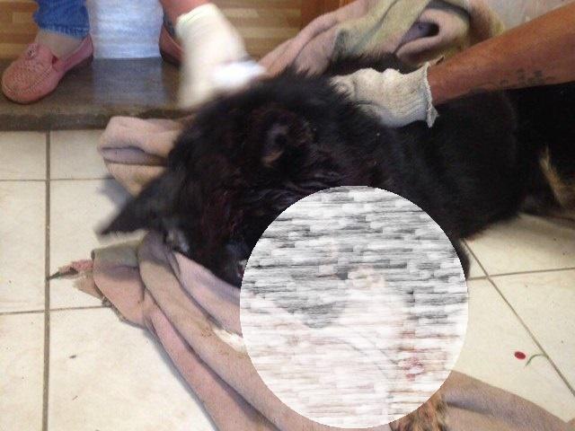 НаЮжном Урале пофакту сурового убийства собаки возбудили уголовное дело