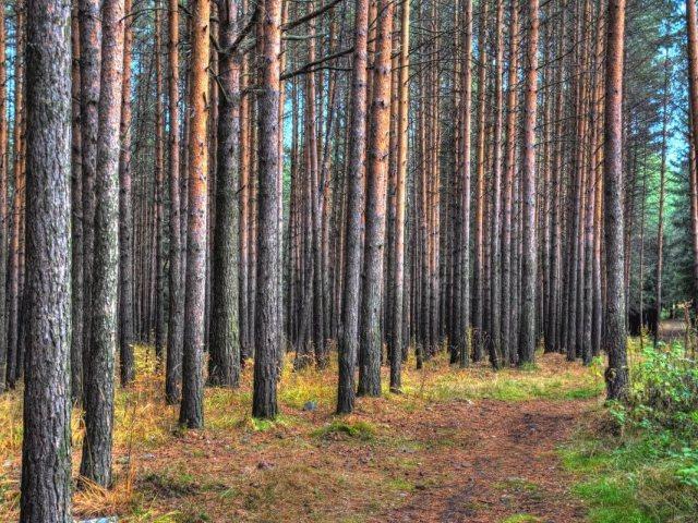 6-летняя девочка потерялась влесу вЧелябинской области