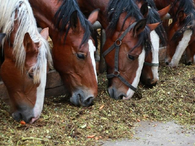 ВАргаяшском районе сельчанин похитил табун лошадей сфермы