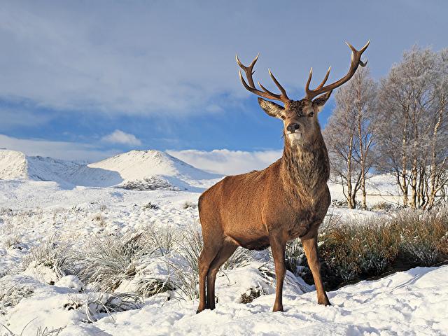 Челябинцев зовут нафотосессию ссеверным оленем