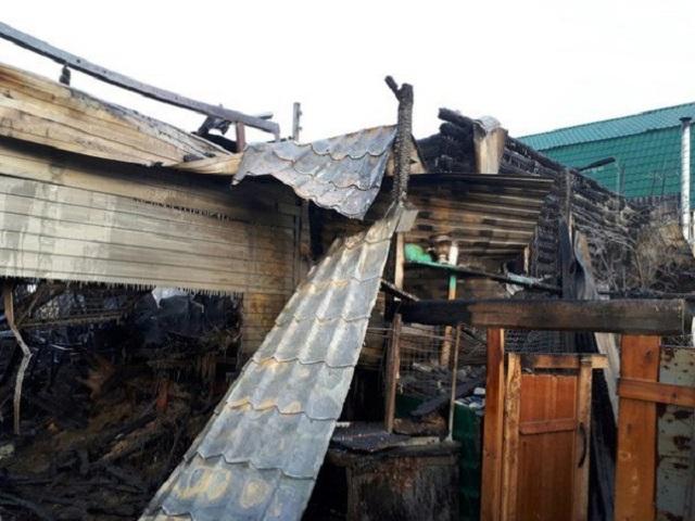 В Челябинской области сгорел приют для животных: погибли 30 собак
