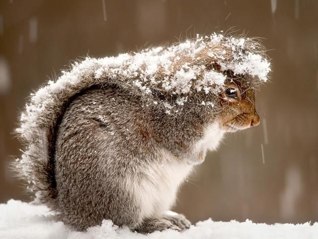 Мокрый снег и дождь: прогноз погоды на Южном Урале на вторник, 24 апреля