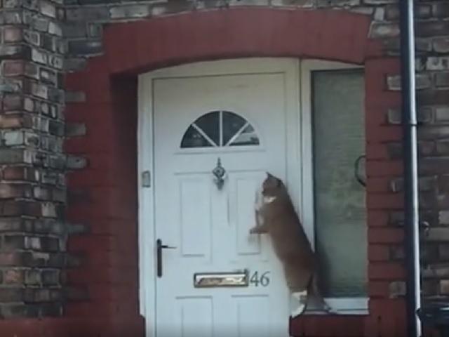 «Самая вежливая кошка вмире» стала интернет-звездой