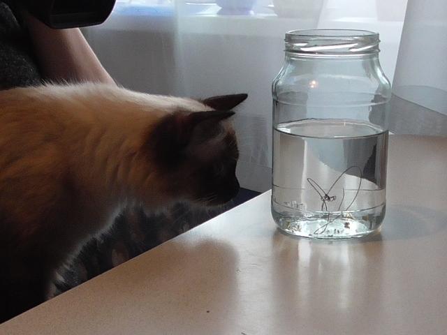 На Южном Урале червь-паразит, выпавший из водопроводного крана, получил имя и подружился с кошкой