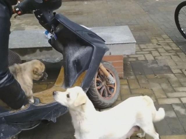 Видео дня: студент снял душераздирающую картину прощания собаки со своим щенком