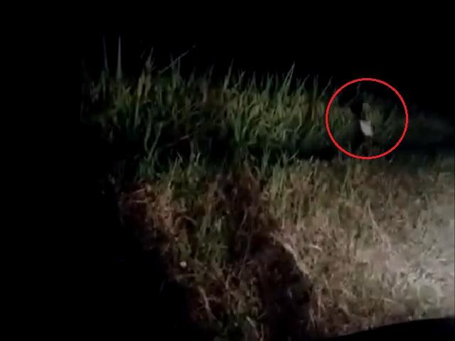 Видео дня: ролик с жутковатым «призраком» озадачил миллионы пользователей соцсетей