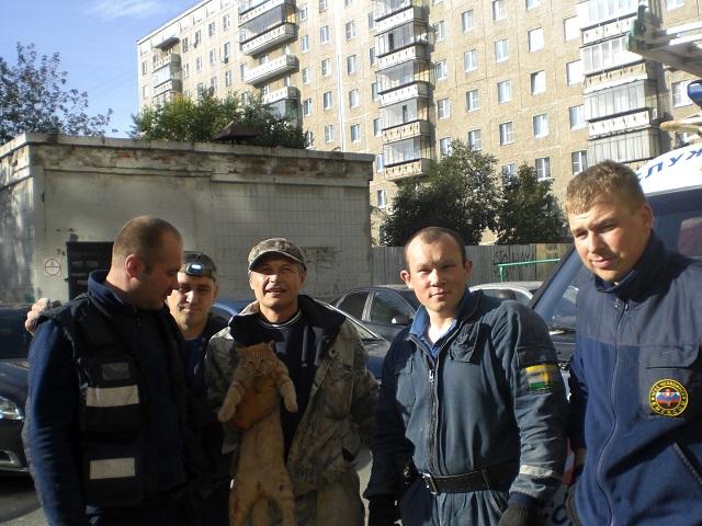 На Южном Урале спасли бездомного кота, на трое суток застрявшего в шве между многоэтажками