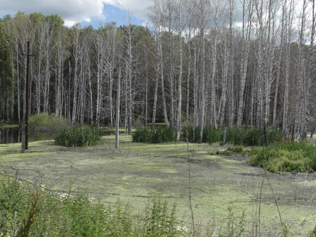 В Чебаркуле завершены работы по замене коллектора, затопившего сточными водами более 11 га леса