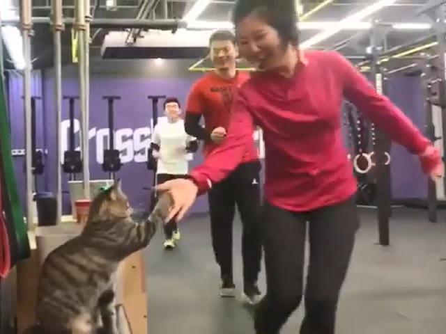 Видео дня: живущий в кроссфит-зале кот стал звездой, давая «пять» посетителям