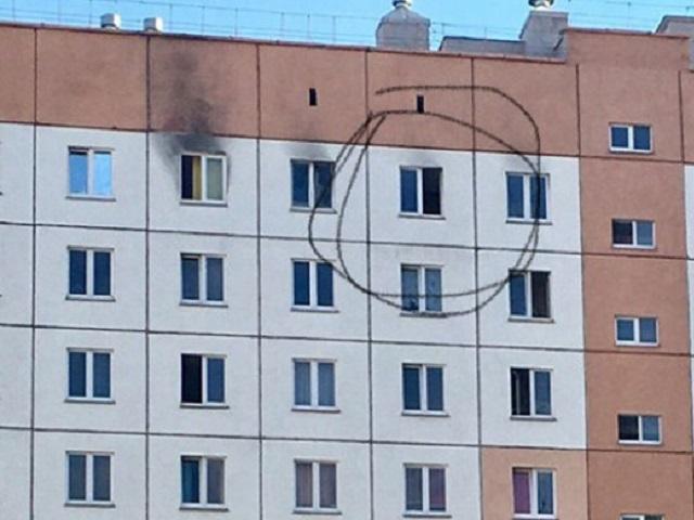 Выбросил из окна: в Челябинской области осудят мужчину, убившего собаку своей жены