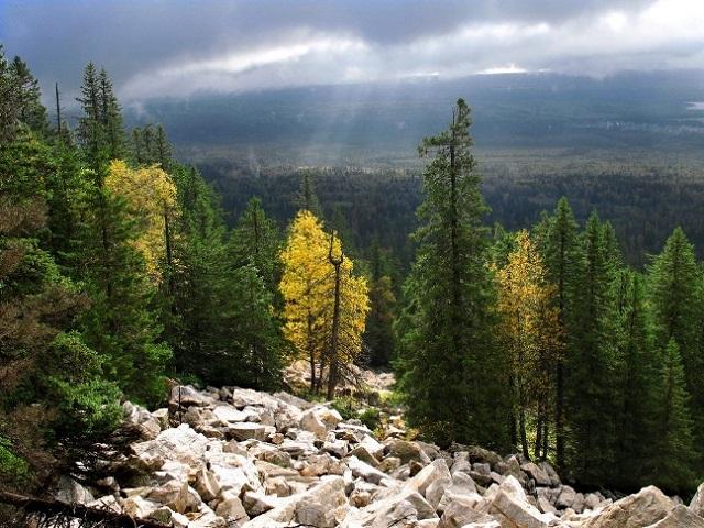 Жительница Миасса получила условный срок за вырубку деревьев в Ильменском заповеднике