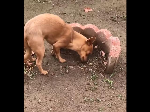 Видео дня: пёс не хочет верить в смерть друга и пытается поделиться с ним едой