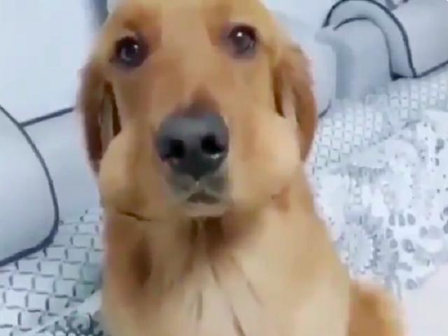 Видео дня: спрятавший еду пёс умилил пользователей Сети