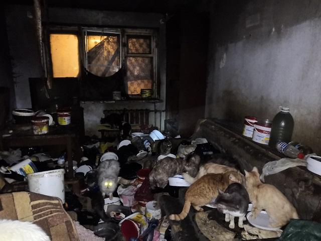 В Миассе два десятка кошек и собак обнаружили запертыми в квартире