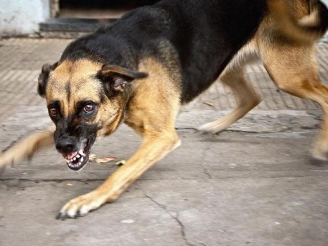 На Южном Урале бешеная собака покусала бабушку и ребенка