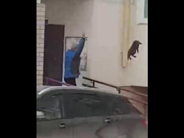 Абсурдный лайфхак: как прогнать лося при помощи живого кота (видео)