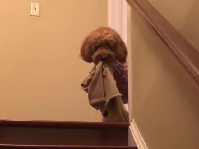 Видео дня: пёс стал звездой Сети благодаря странному вечернему ритуалу