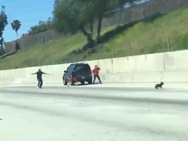 Видео дня: безумная собачка устроила переполох на многополосном шоссе
