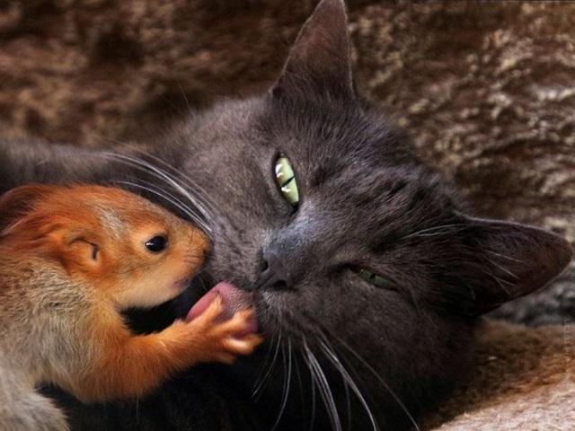 Видео дня: кошка усыновила бельчат и растопила сердца интернет-пользователей