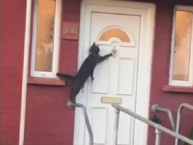 Видео дня: котейка забавно просится домой в шесть часов утра