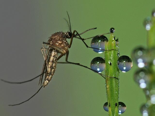 Ученые решили спасаться от комаров при помощи музыки и цветов