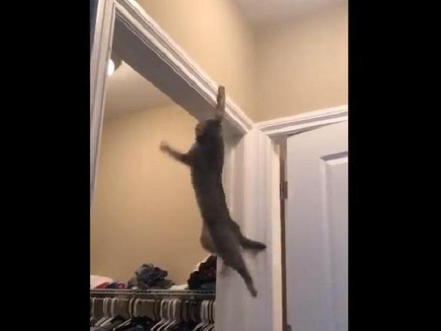 Видео дня: воркаут-тренировка котейки «утекла» в Сеть и сделала его звездой