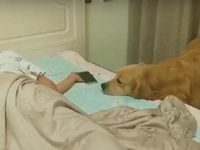 Видео дня: самый заботливый в мире пёс растрогал пользователей Сети