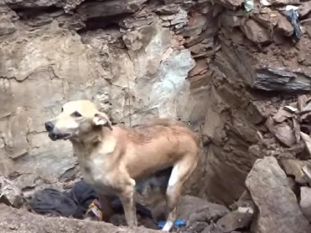 Видео дня: очевидцы сняли душераздирающую сцену спасения щенков мамой-собакой